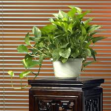 indoor plant soil indoor growing soil white
