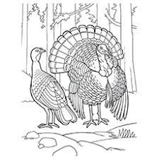 wild turkey coloring pages. Beautiful Pages Eastern Wild Printale Coloring Pages Of Turkey In T