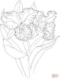 Coloring Pages Of Orchids Coloring Page
