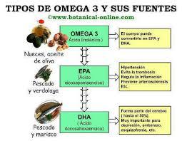 Propiedades de los ácidos grasos poliinsaturados – Botanical-online