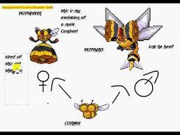 Pokemon Beedrill Evolution Chart Combees New Evolution