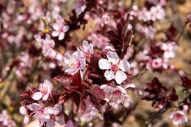 flowering trees for residential landscaping