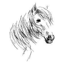 Foto Testa Cavallo Immagini E Vettoriali