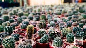 สวรรค์ของคนรัก 'Cactus' กระท่อมลุงจรณ์ จังหวัดปทุมธานี – Auto Variety by  Thousand Mile TV