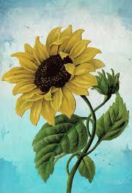 sunflower print set of two sunflowers art botanical