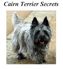 Cairn Terrier Secrets: How to Raise Happy and Healthy Cairn Terriers eBook:  Daniels, Janie: Amazon.co.uk: Kindle Store