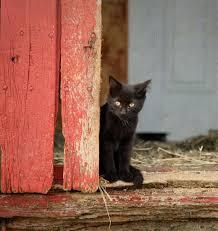 humane society kittens for adoption. Wonderful Kittens Cat By Barn Door And Humane Society Kittens For Adoption D