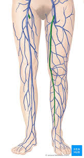Great Saphenous Vein Anatomy And Clinical Conditions Kenhub