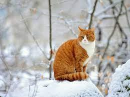 Winter Kitten Wallpaper ...