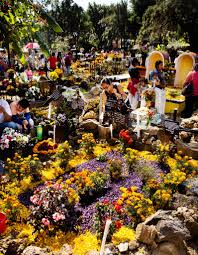 the planthunter marigolds the mexican day of the dead kenny viese
