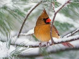 winter-birds-desktop-wallpaper-for ...