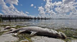 Toxic Red Tide Blooms Are Creeping Up Floridas West Coast