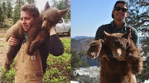 Bear expert talks about behind-the-scenes of tranquilizing, tracking    KSL.com