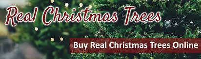 Buy Real Christmas Trees Online For Home Delivery Jacksons