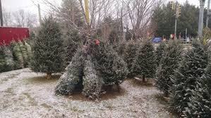 Christmas Trees for Sale in Arnold, Maryland \u2013 New Location 2018 Tree MD | Groundshog Lawn \u0026 Landscape