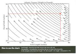 Bonefish Length Weight Chart Conservation Tarpon Seasons Coming Weigh Them The Right
