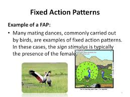 Fixed Action Pattern Example