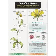 Describing Flower Chart Name Trail