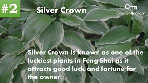 feng shui plant office. To Learn About More Feng Shui Plants: Plant Office