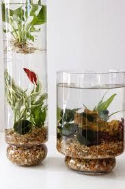 Indoor Garden 20 Diy Indoor Gardens For Your Home