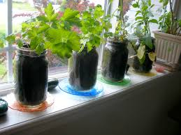 Small Picture Indoor Herb Garden Design Ideas 30 Amazing DIY Indoor Herbs