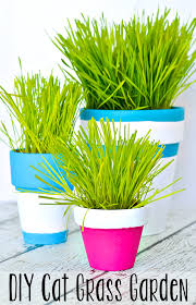 this simple tutorial shows you how to paint terracotta pots to create an indoor cat grass