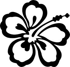 hawaiian hibiscus flower shoeblackplant black and white