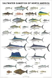 Saltwater Fish Chart Saltwater Gamefish Of North America Poster Flick Ford