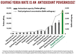 5 Reasons Why You Should Drink Yerba Mate Instead Of Coffee