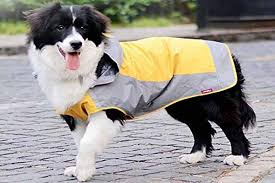 Top 15 Best Dog Raincoats To Have In 2019 Reviews And Buying