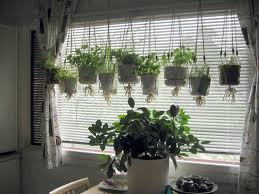 Rustic Dining Room Design With Hanging From Ceiling Indoor Herb Garden  Planter Pots Beside Window With White Blinds Ideas