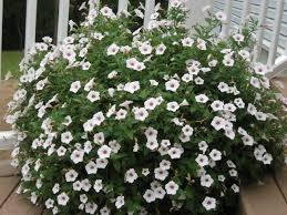 Best 25 Plants For Sun Ideas On PinterestContainer Garden Ideas Full Sun