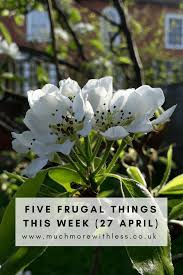 sized image of plum blossom for my five frugal things post