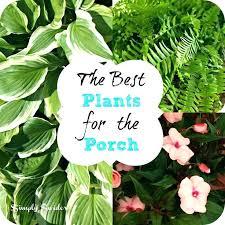 best plants for patio pots best plants for the porch fern and impatience patio pots pot best plants for patio pots