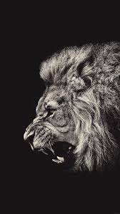 lion wallpaper iphone 6. Simple Iphone MaleLionPortraitiPhone6PlusHDWallpaper Intended Lion Wallpaper Iphone 6 L
