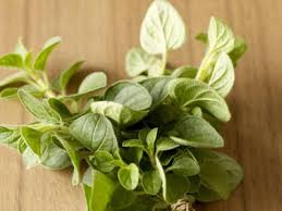 how to grow and care for oregano in your garden