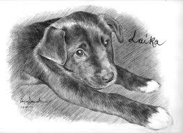 Disegni Di Cani Difficili Playingwithfirekitchencom