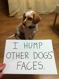 Funny Dog Quotes Extraordinary 48 Funny Dog Quotes With Images Good Morning Quote