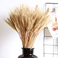 Ablerfly 100pcs Large Wheat <b>Dried Flowers</b> Garden <b>Plants Natural</b> ...