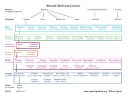 Biological Classification Chart About Classification How It Works