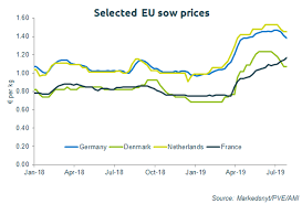 European Sow Prices Rally Pig World