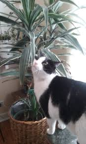 Living With Plants and Pets