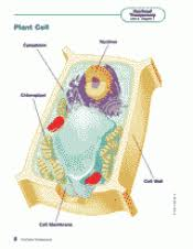 animal and plant cells for 6th grade. Brilliant 6th Plant Cells In Animal And For 6th Grade E