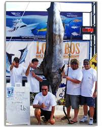 Cabo Fishing Report And Forecast Fishing Seasons Chart