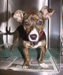 valgus dog. photo: tilly valgus dog a