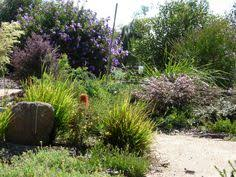 Small Picture australian native garden design Google Search Australian