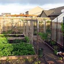 Small Picture Learn what to plant in raised beds in a desert vegetable garden in