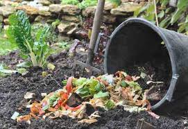C Trench Composting Is An Easy Way To Compost Using Kitchen Scraps