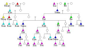 Anthropology Genealogy Chart Ju Hoansi Namesake Kinship