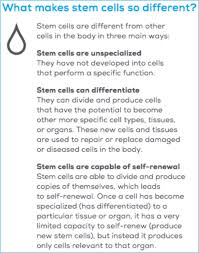 cell research pros and cons essay stem cell research pros and cons essay